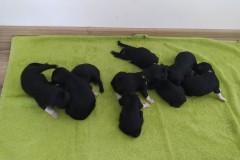 puppies_01