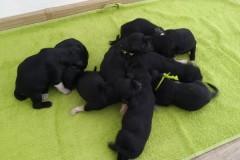 puppies_02